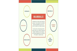 Mammals - Definition and Concept Map
